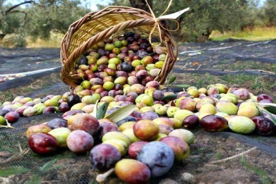 Olives Tasting Tour
