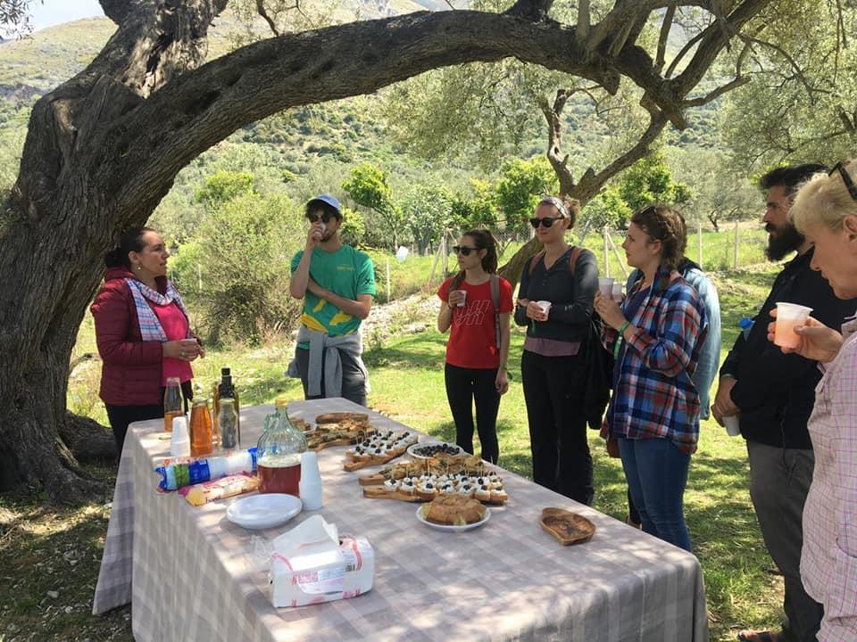 Olive Oil tasting tour