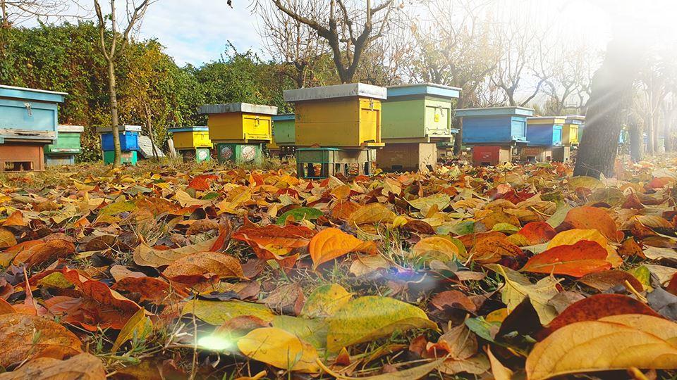 Honey Bees house