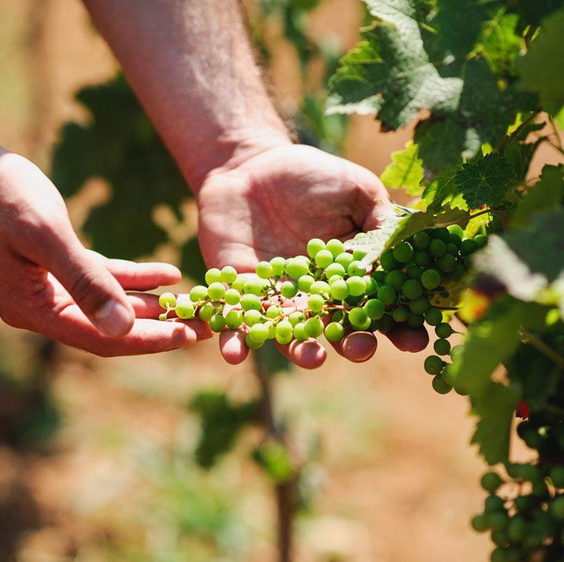 Authentic Albanian Wine